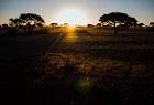 Limpopo Venetia Reserve